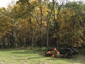 Beautiful Photos - Pumpkins and Wagon